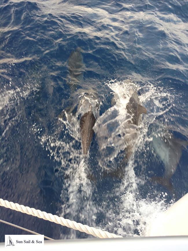 Alquilar Catamaran en Ibiza